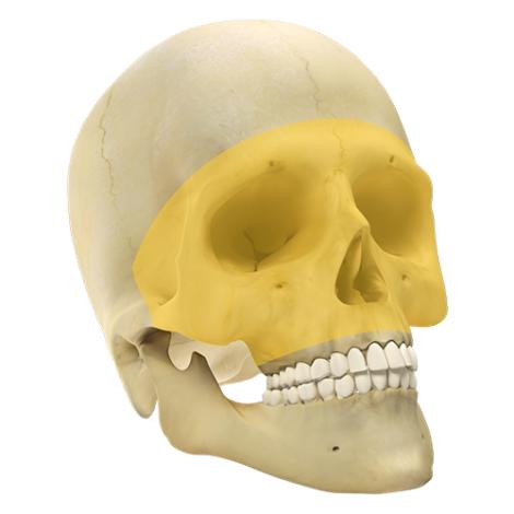 Maxilo Facial GII 1.5 - Sitema de Micro Placas