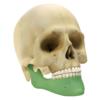 Maxillofacial GII 2.4 - Mandibular Reconstruction System