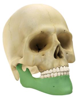 Maxilo Facial GII 2.4 - Sistema de Reconstrução Mandibular